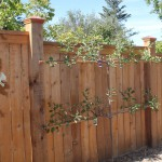 Copper capped cedar privacy fence