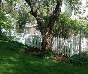 Wood fencing, traditional white picket fence, spaced with pointed pickets