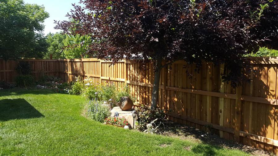 Backyard fence, cedar privacy fence Denver Colorado